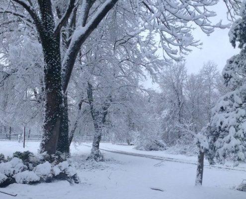 Wintery Lawn